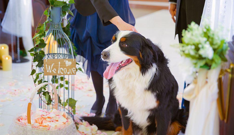 札幌の人気結婚式場|北湯沢緑の森の教会|森のソラニワ|I